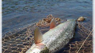 道東の野生虹鱒をフライで釣る方法